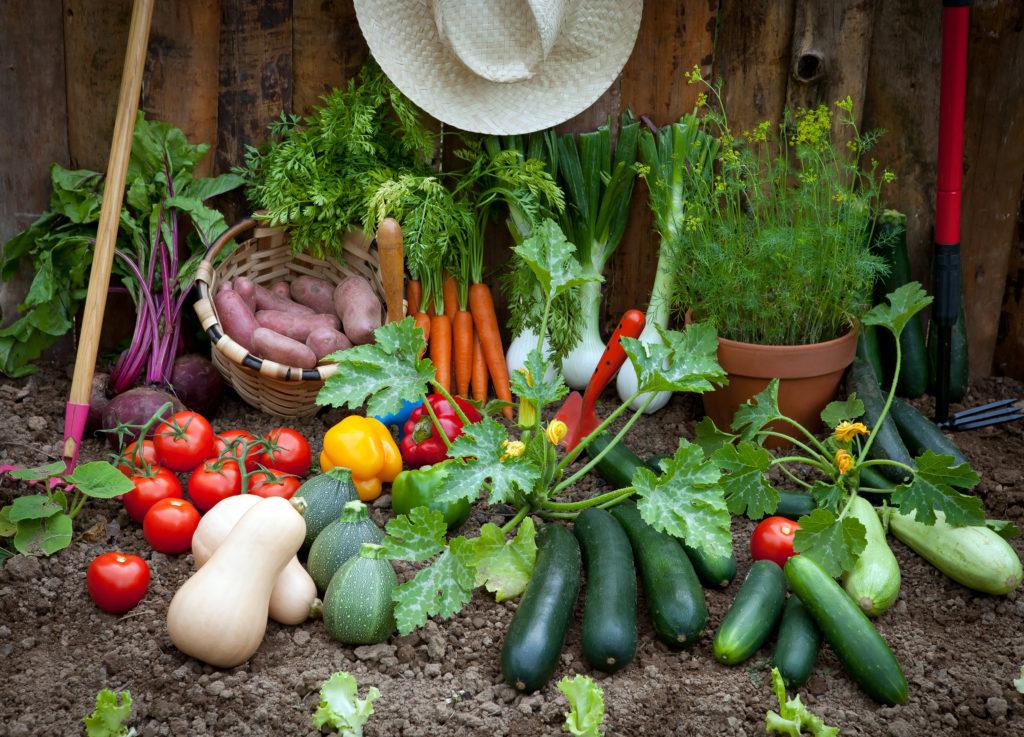 Beet und Balkon Gemüse