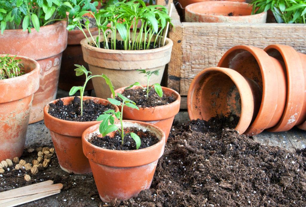 Samen und Zwiebeln für Beet und Balkon