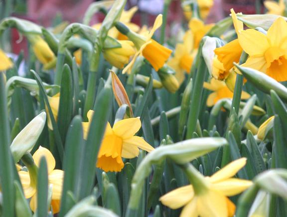 Beet und Balkion Einleitung Frühjahr