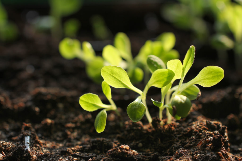 Gartenzubehör Pflanzenaufzucht